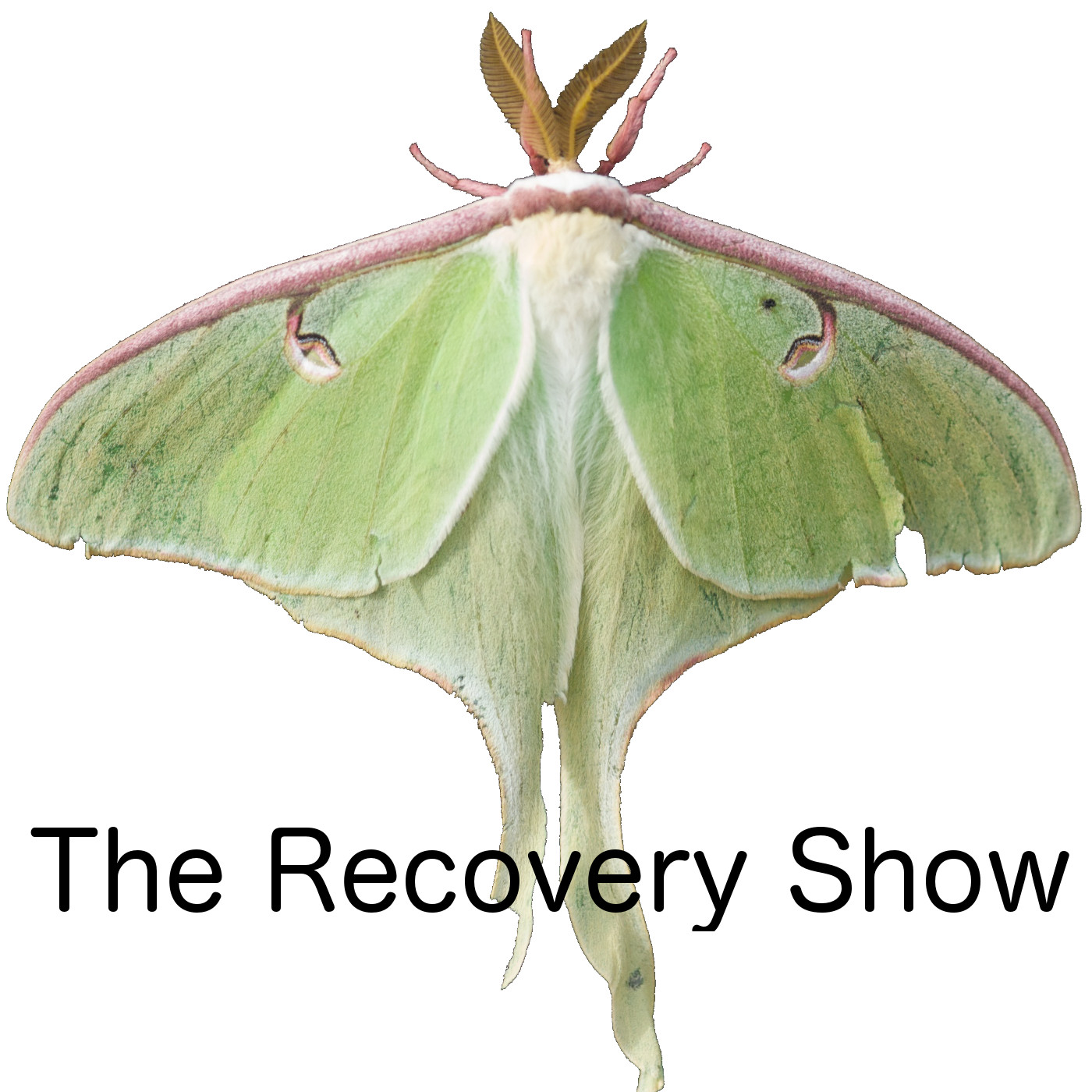 The Recovery Show » Finding serenity through 12 step recovery in Al-Anon – a podcast