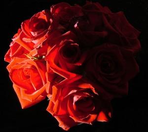 idealist roses