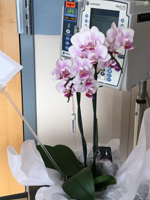 Flowers in the hospital room